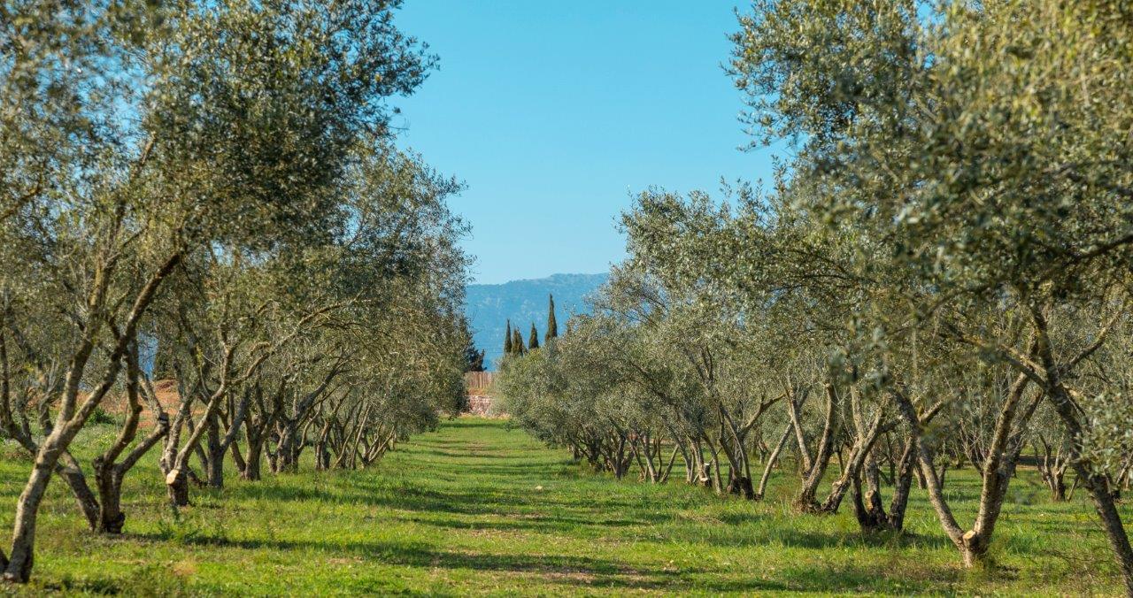 Oloeturismo en Mallorca